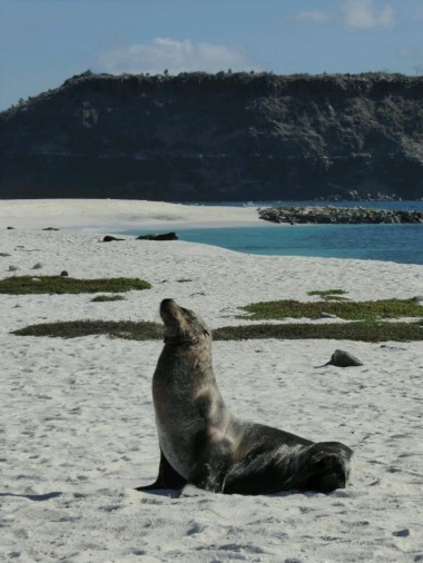 Day 1 - Sealion on Mosquera Islet
