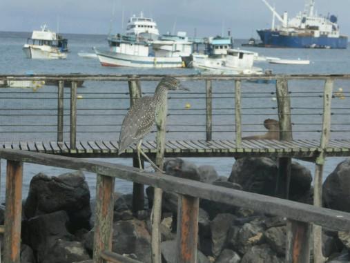 Day 4 - Heron at San Cristobal