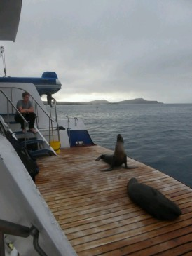 Day 6 - These two Sealions popped onto the back of the boat and weren't going to budge even when the boat started. One male even stayed for some of the overnight trip to Santa Fe